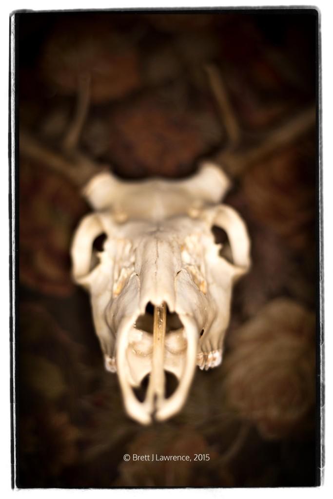 Skull Test Image 1